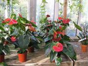 комнатные и садовые растения